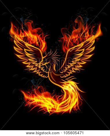 Fire burning Phoenix Bird with black background