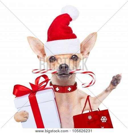 Christmas Dog As  Santa Claus