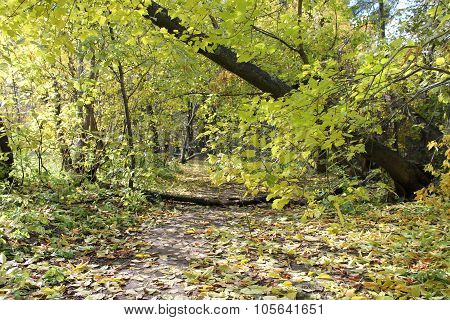 trailway in the forest
