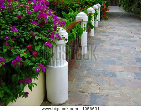 Tropical Garden Walkway And Fence