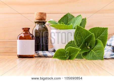 Country Borage,indian Borage,coleus Amboinicus Lour With White Mortar And Essential Extract Oil On W