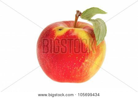 image one apple with a leaf on a white background poster