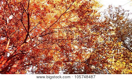 Similiar to a Silk Screen Print. Autumn or Fall Foliage.