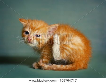 Red Little Kitten Scratch Itching Ear