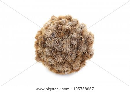 Ball of Burrs