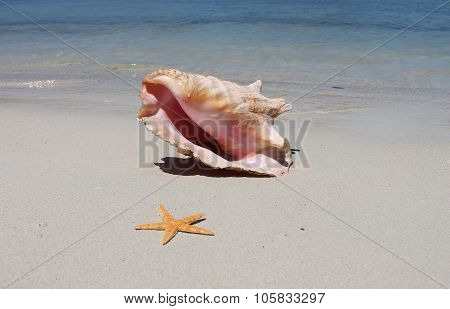 Conch shell on sand beach with sea waves