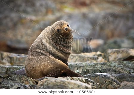 The Brown Seal