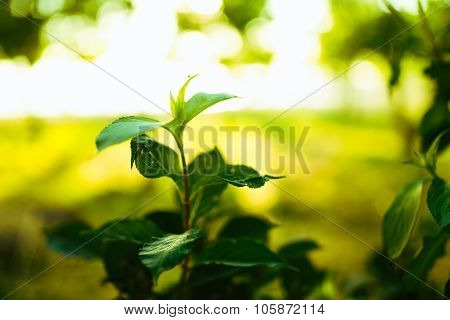 Fresh green leaves and selective focus background