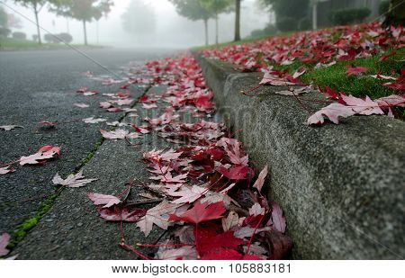 Red Vine Maple Leaves On A Foggy Road