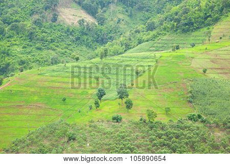 Rice Growing Areas