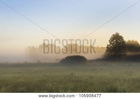 Morning Fog In The Kruszyniany, Poland