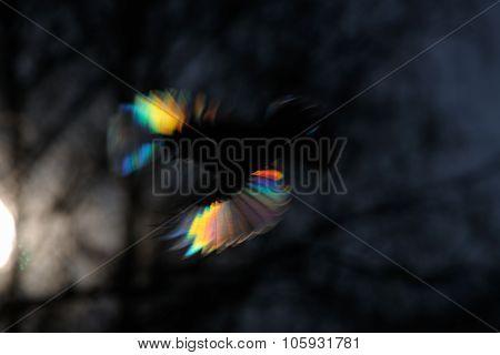 Firebird As Is