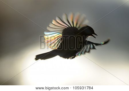 Flying Firebird