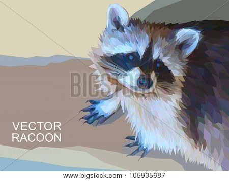Racoon polygonal illustration. Vector  eps 10