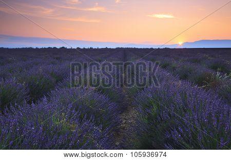 Sunrise Over Lavender Field - Valensole