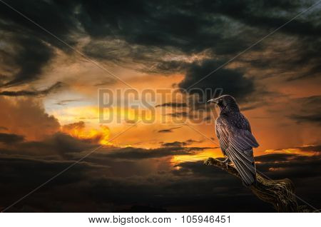 Raven At Sunset