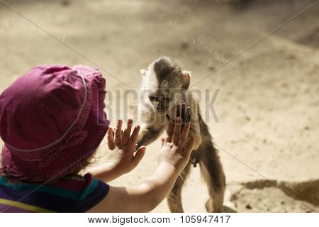 Monkey Playing With Toddler Girl