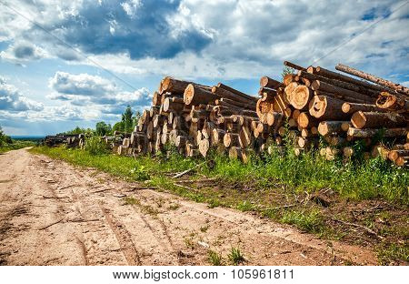 Piles Of Timber Along The Forest Road In Summertime