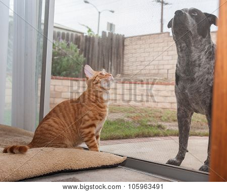 Tabby kitten and dog pal separated by screen door. poster