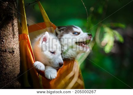 puppies in a bag suspended on a tree