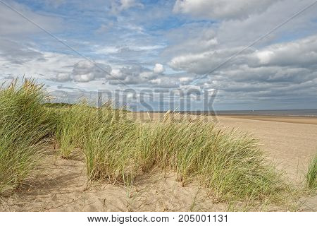 A beach with Marram Grass in LincolnshireUK