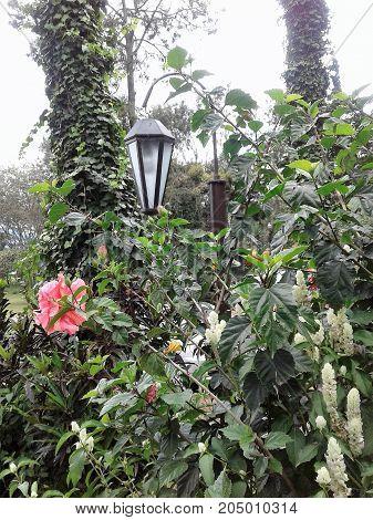 Farol entre las flores del jardin encantado