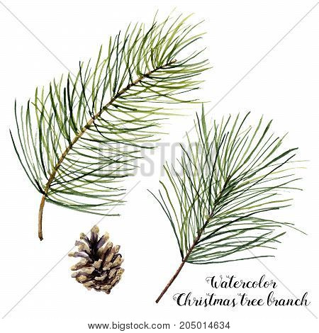 Watercolor Christmas tree branch set. Hand painted Christmas fir branch with cone isolated on white background. Botanical illustration. Holiday print for design