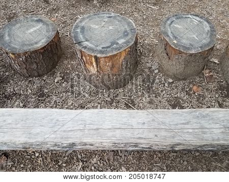 three old tree stumps and a wood log