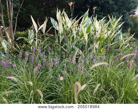 purple flowers on a green plant and other plants
