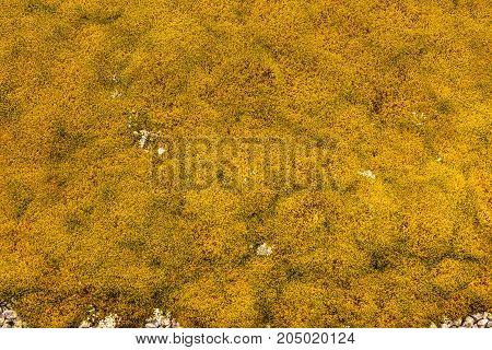 Background Of Stone Covered With Lichen Moss