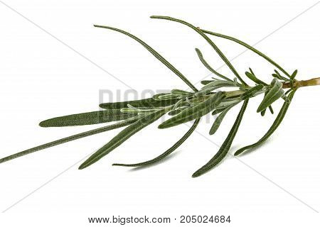 Leafs Of Lavender Flowers, Isolated On White Background