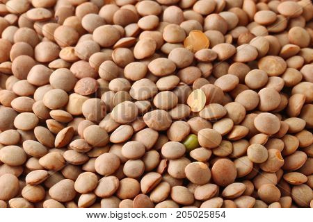 Close up of uncooked brown lentils background