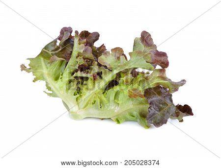 fresh red oakleaf lettuce on white background