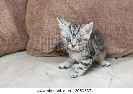 One Kitten on a sofa - stock image