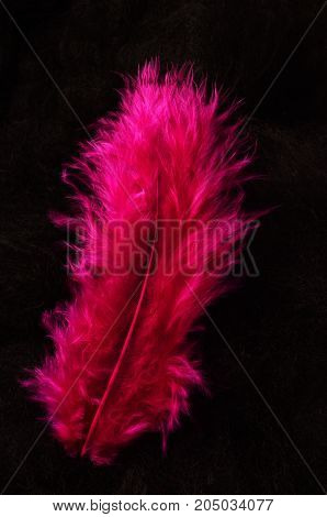 Colored feathers for background : pink feathers