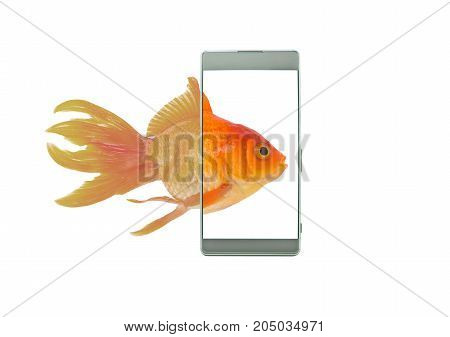 Monitor display screen technology of mobile phone Goldfish swim into the phone an phone screen makes a bright colors White background Telephone technology concept.