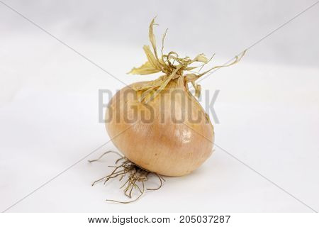 Juicy onion on the white background with leaf and droops with copy space