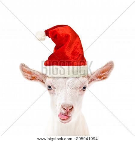Portrait of a funny goat in a New Year's cap, showing tongue, isolated on white background