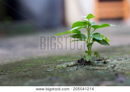 A small tree on a cement floor