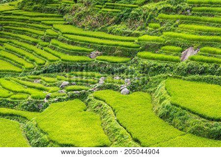 Beautiful scene of rice fields and terrace on daylight sunshade.