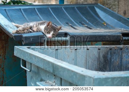 A homeless sad cat laying on the lid of a garbage can on a hot summer day