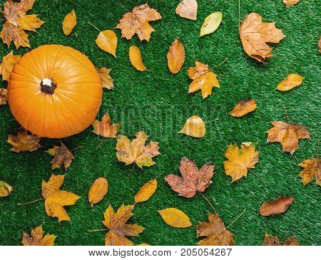 Various Autumn Leaves And Orange Pumpkins