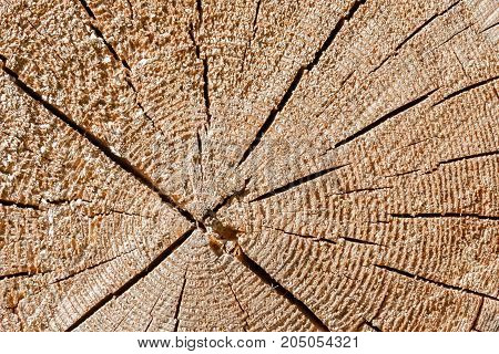 Old tree cut texture big cracks in the structure