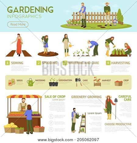 Gardening infographics template with horticulture banner, information about stages of growing plants, sale of crop vector illustration
