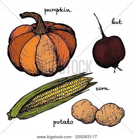 Vegan Menu - Pumpkin Beet Corn Potato - color hand-drawn objects