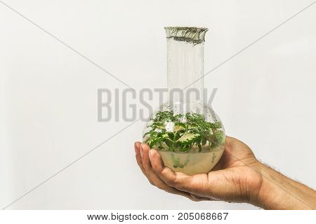 Human researcher hand holding flask with in vitro micro plant, scientific experiment and gmo biotechnology concept, copy space