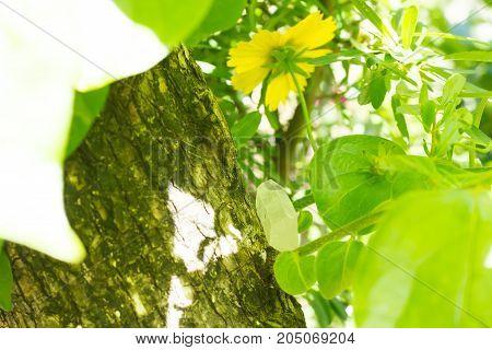 andara  healing crystal on a green leaf .
