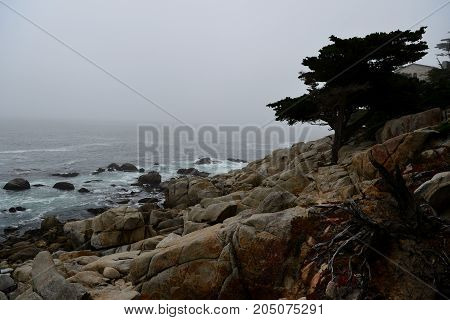 Coastline Along The 17 Mile Drive In Overcast Day