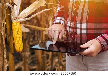 Female farmer working on tablet computer in harvest ready corn maize crop field