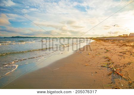 bright golden sunset on the beach, the waves on the sand, shells. setting sun